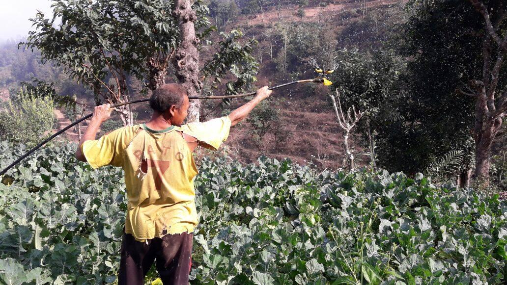 Nou projecte agrícola a Manpha