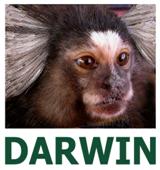 Logo-Darwin