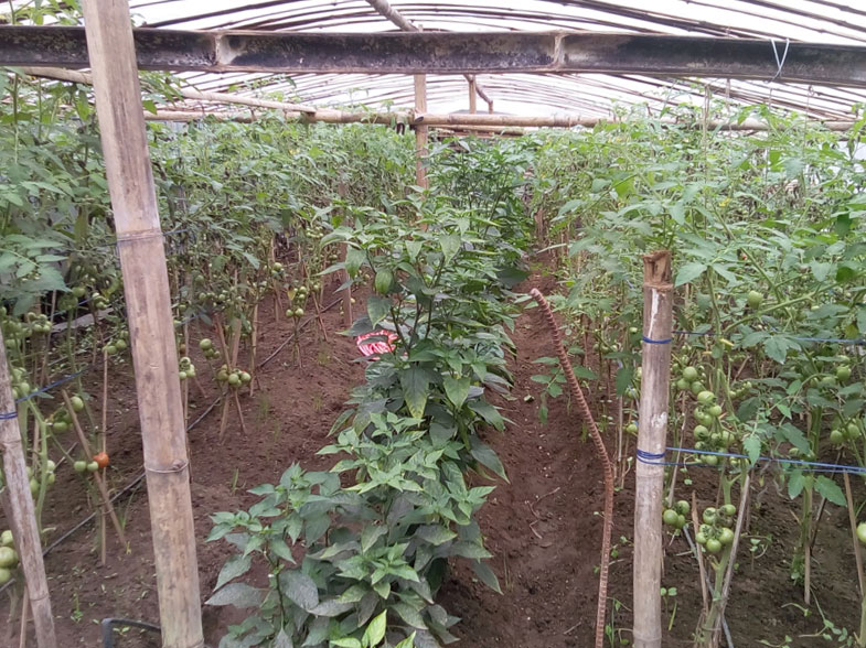 Seeds and Cures Provided for Project Agro Sindhupalchowk